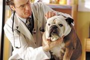 скорая ветеринарная помощь круглосуточно