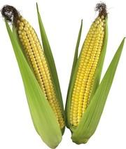 Куплю кукурузу на экспорт
