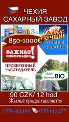 Чехия! сахарный завод! срочно! био! зп 800-1000€