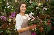 Plantarea florilor și arbuștilor deorativi. Germania